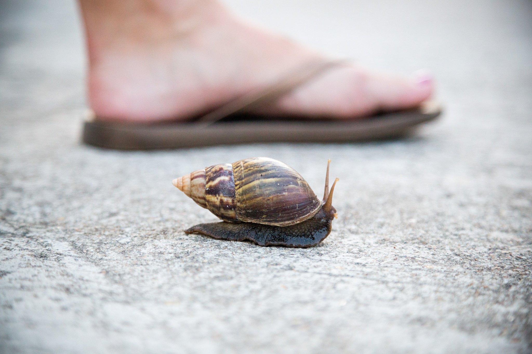 Snail crawling next to a person walking