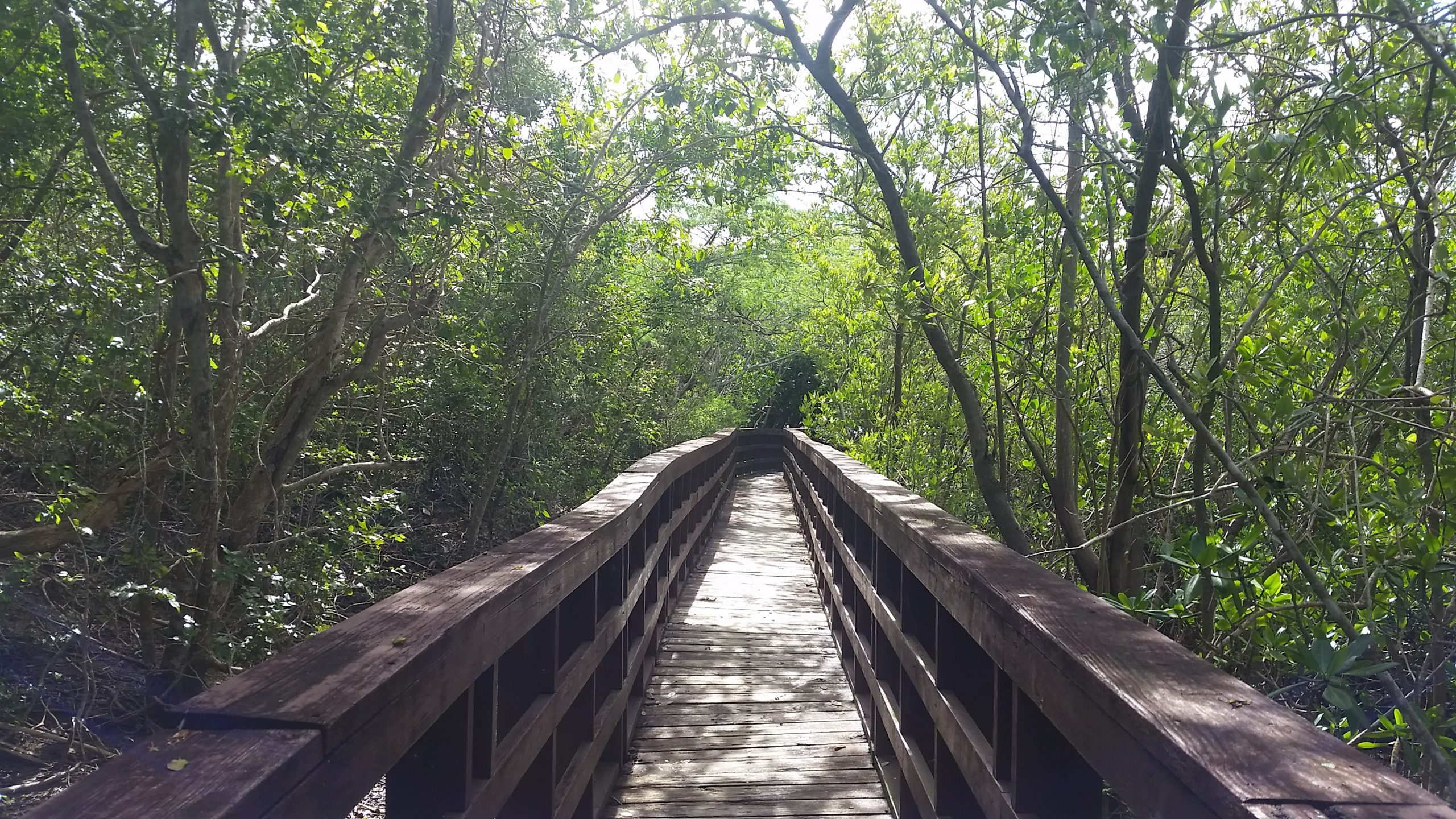 Wooden path through a jungle