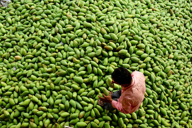 Man sitting with a ton of mangoes