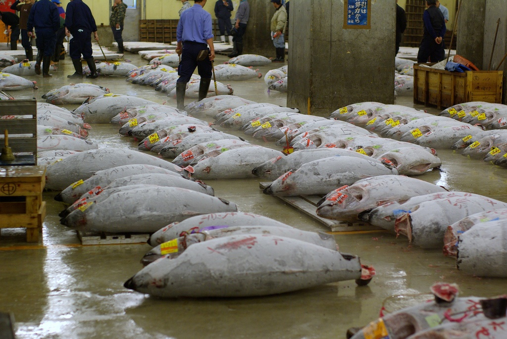 Tuna market in Japan
