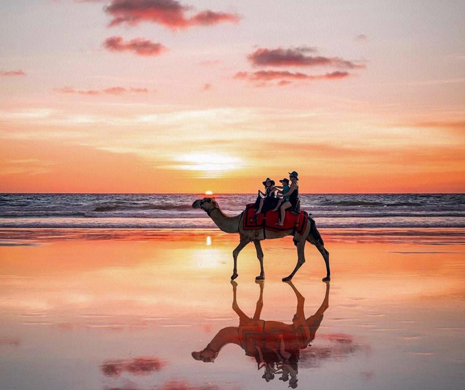 Arabic has hundreds of words for camel and words for each stage of love.